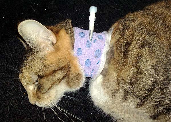 cat accessories equipment sale